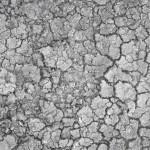 square_233804_dry