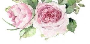 square_233804_rose